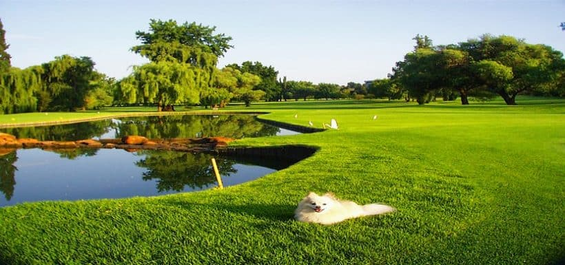 Johannesburg Stay & Play Randpark Golf Course Break Gauteng 5