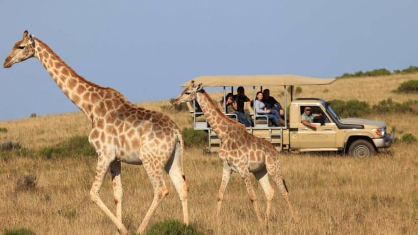 Big 5 Golf & Big 5 Safari South