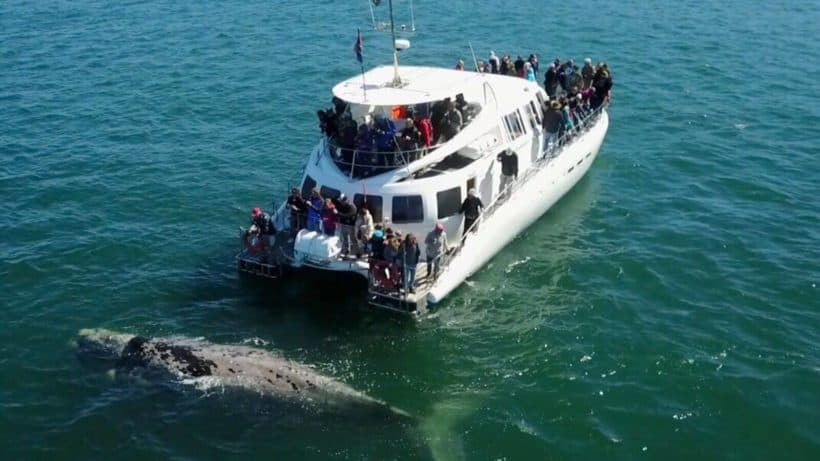 Whale Watching Golf Holiday